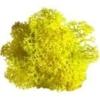 Lichen scandinave jaune