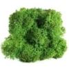 Lichen scandinave vert tropical
