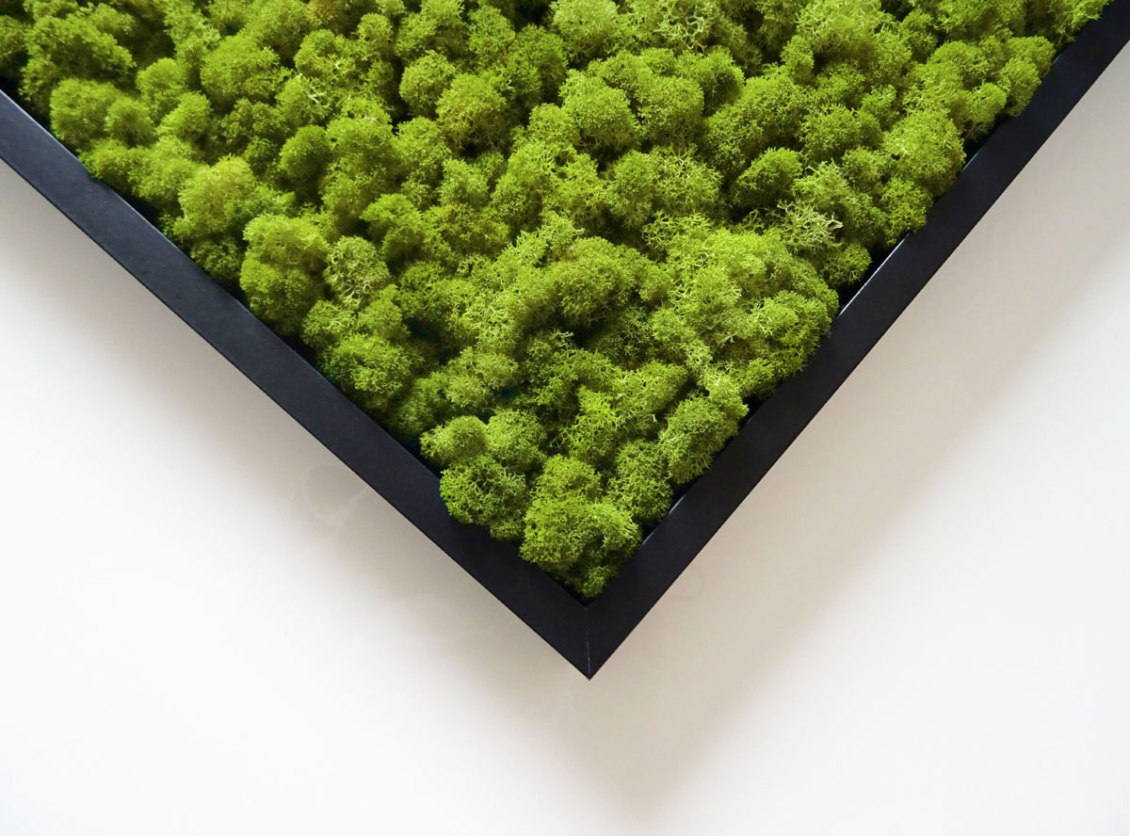 lichen scandinave vert lime
