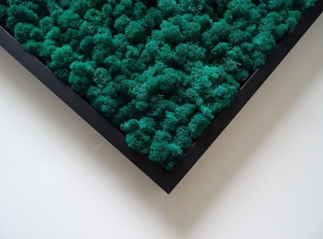 lichen scandinave vert pétrole