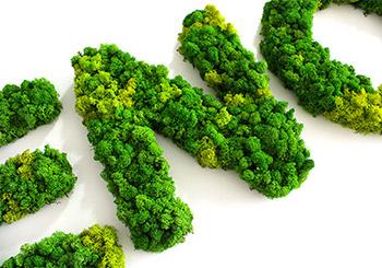 choix-lettres-vegetales