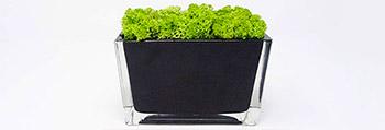 choix-objet-deco-vegetal