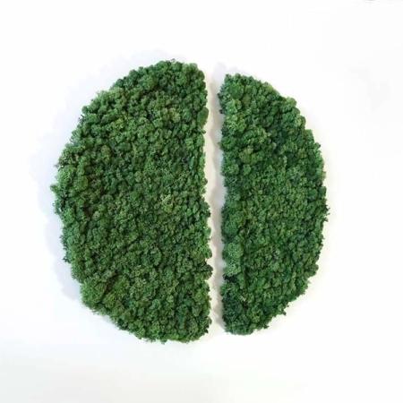 Demi Cercle végétal