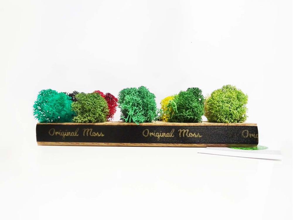"""Échantillons de <span class=""""titre-produit-span-vert-tropical """">lichen scandinave stabilisé</span>"""