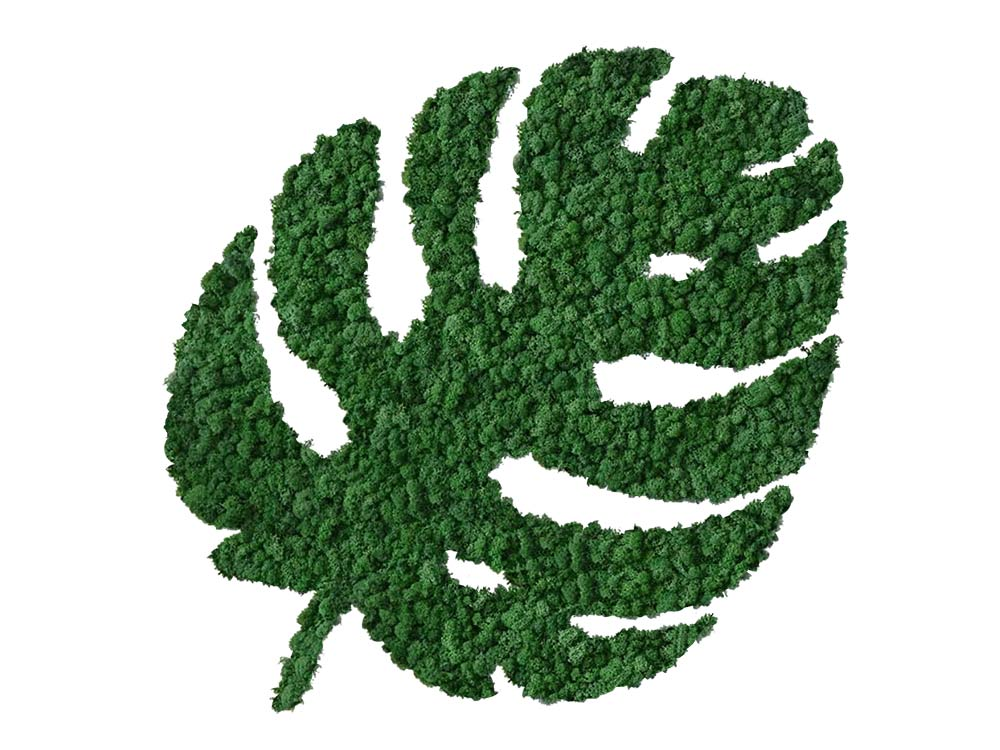 Feuille Tropicale végétale en lichen scandinave naturel & stabilisé