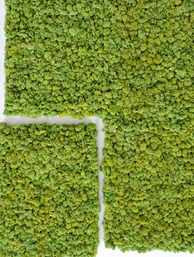 Moss wall - Preserved moss wall