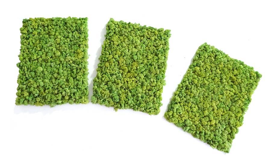 Le kit mur végétal qui change tout