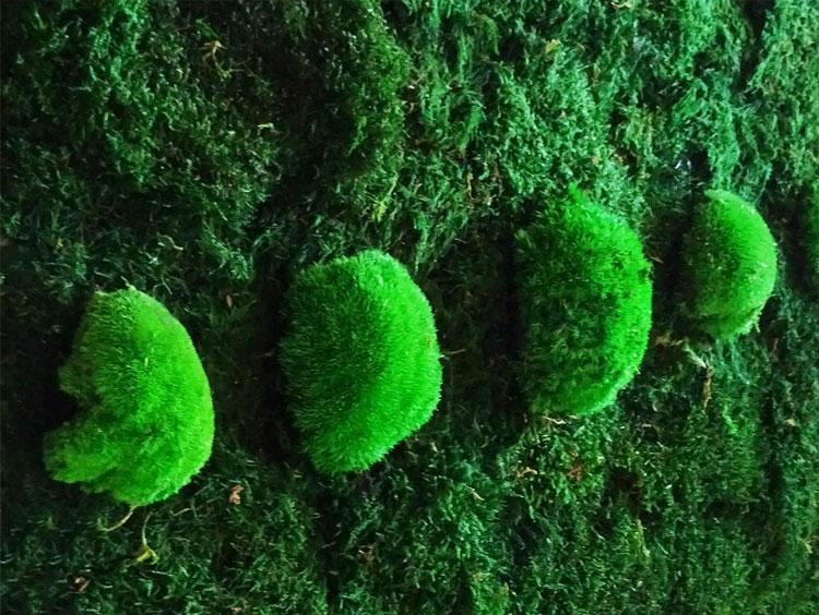 Original Moss: Décoration végétale | Tableau végétal | Mur végétal