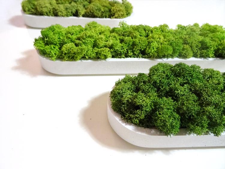 Zoom sur des formes végétales personnalisées en lichen stabilisé