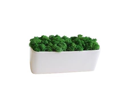 Mini jardinière avec mousse stabilisée
