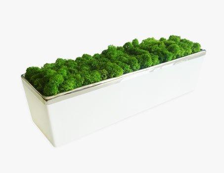 jardiniere mousse