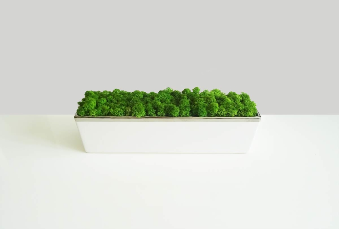 Grande jardinière lichen