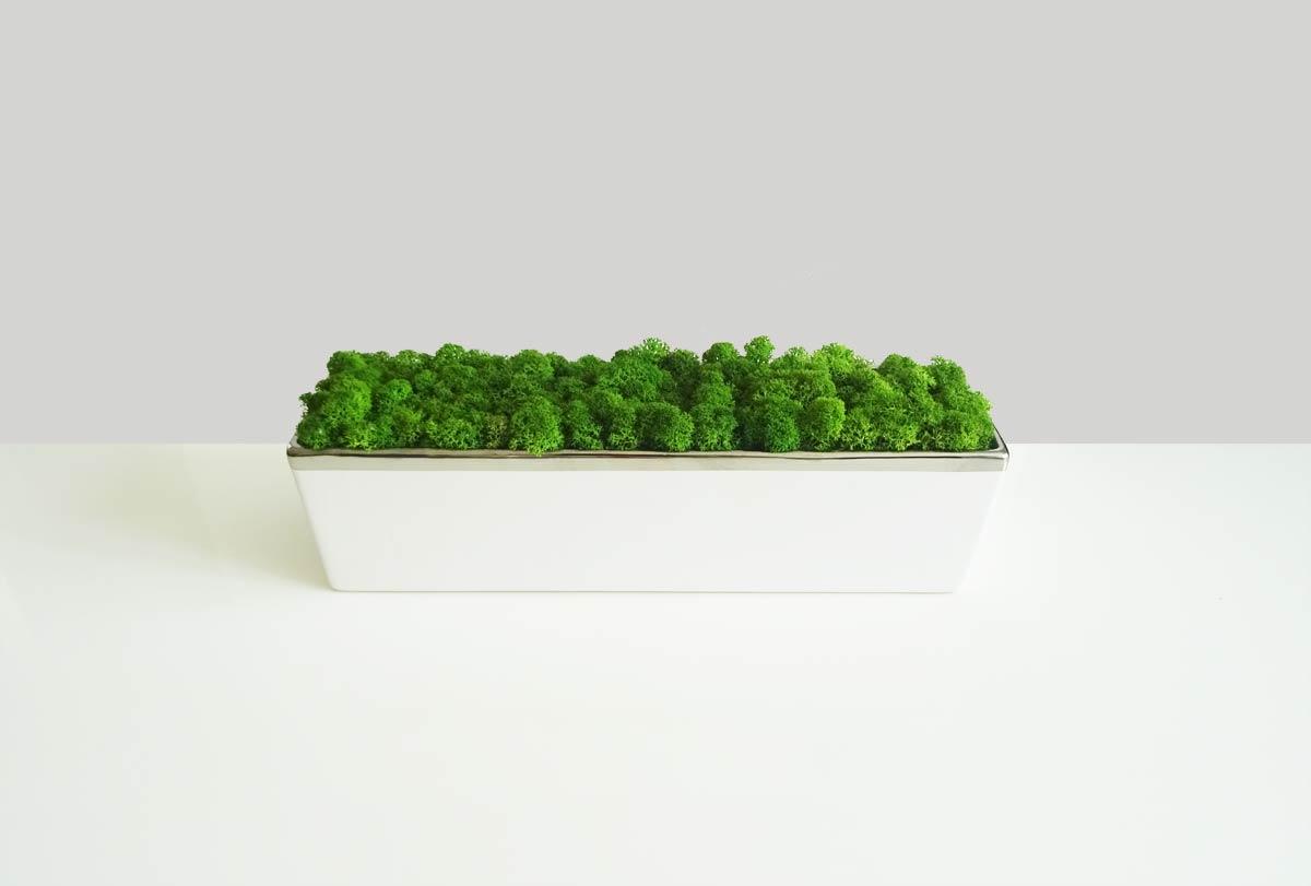 jardini re d 39 int rieur lichen stabilis originalmoss. Black Bedroom Furniture Sets. Home Design Ideas