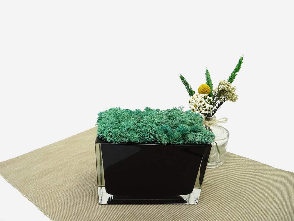 Jardinière en verre lichen