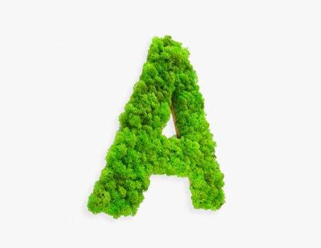 Objets déco végétale