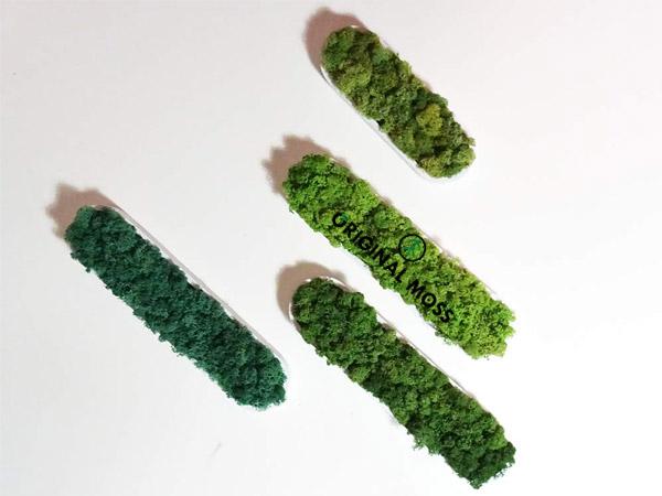 Formes végétales vertes