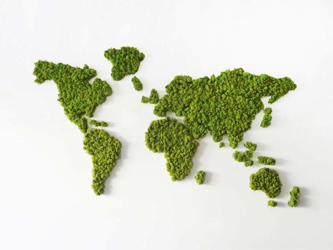 Map Monde végétale en lichen scandinave naturel & stabilisé