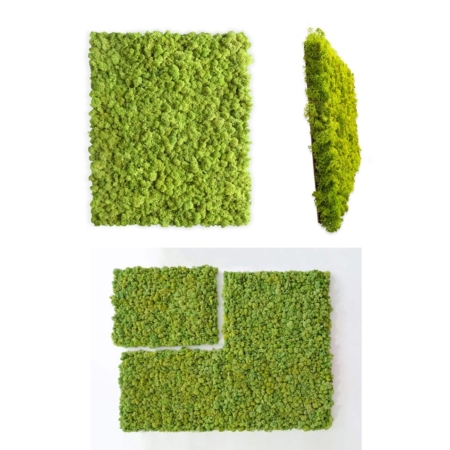 "Moss wall kit (interior)<br><span class=""titre-produit-span-autres-2"">preserved moss Parcels</span>"