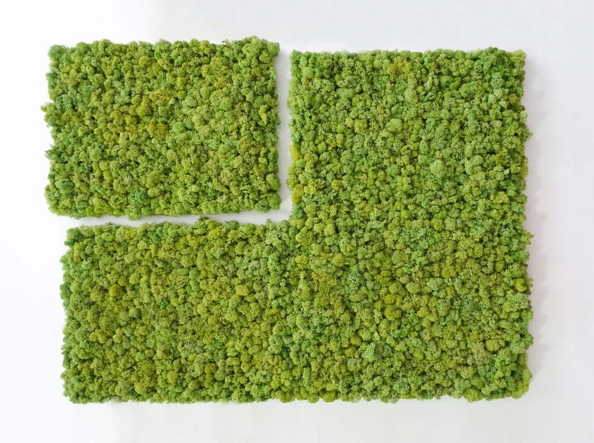 mur v g tal stabilis kit poser soi m me original moss. Black Bedroom Furniture Sets. Home Design Ideas