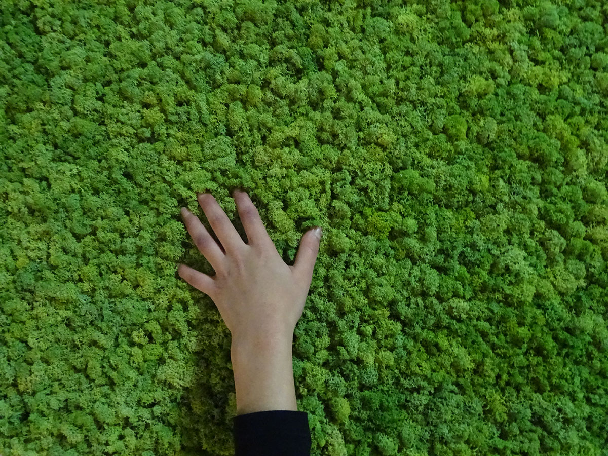 Le mur végétal en kit qui change tout