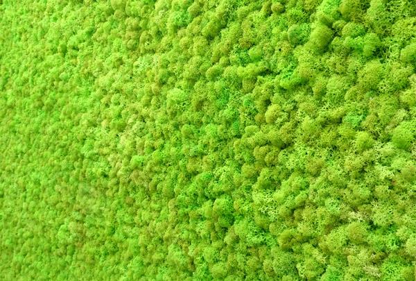 mur v g tal d 39 int rieur en lichen scandinave stabilis. Black Bedroom Furniture Sets. Home Design Ideas