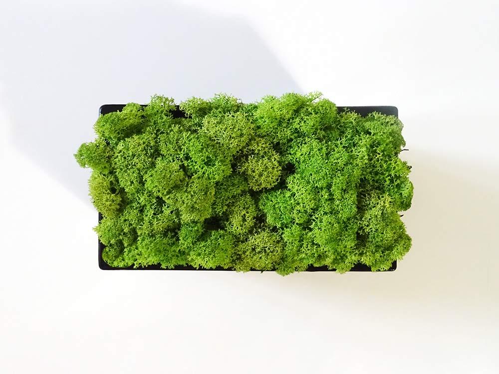 Jardinière en verre remplie de lichen stabilisé vert vue de haut