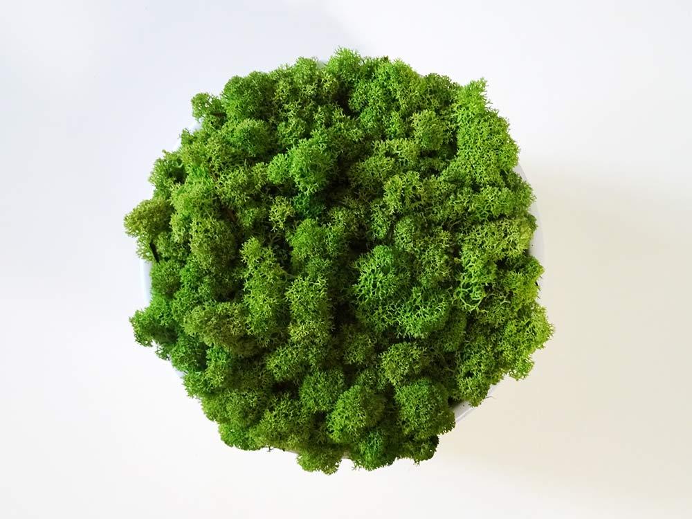 Centre de table végétal