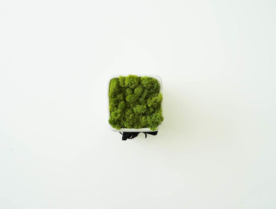 Pot carré lichen