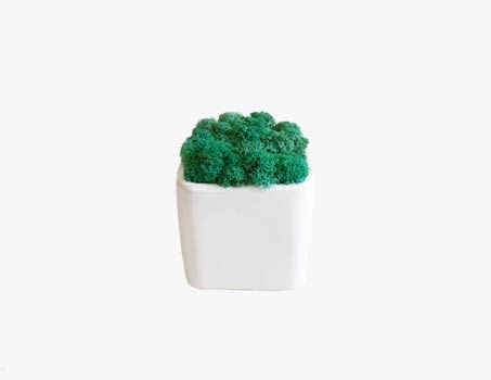 Moss decoration objects