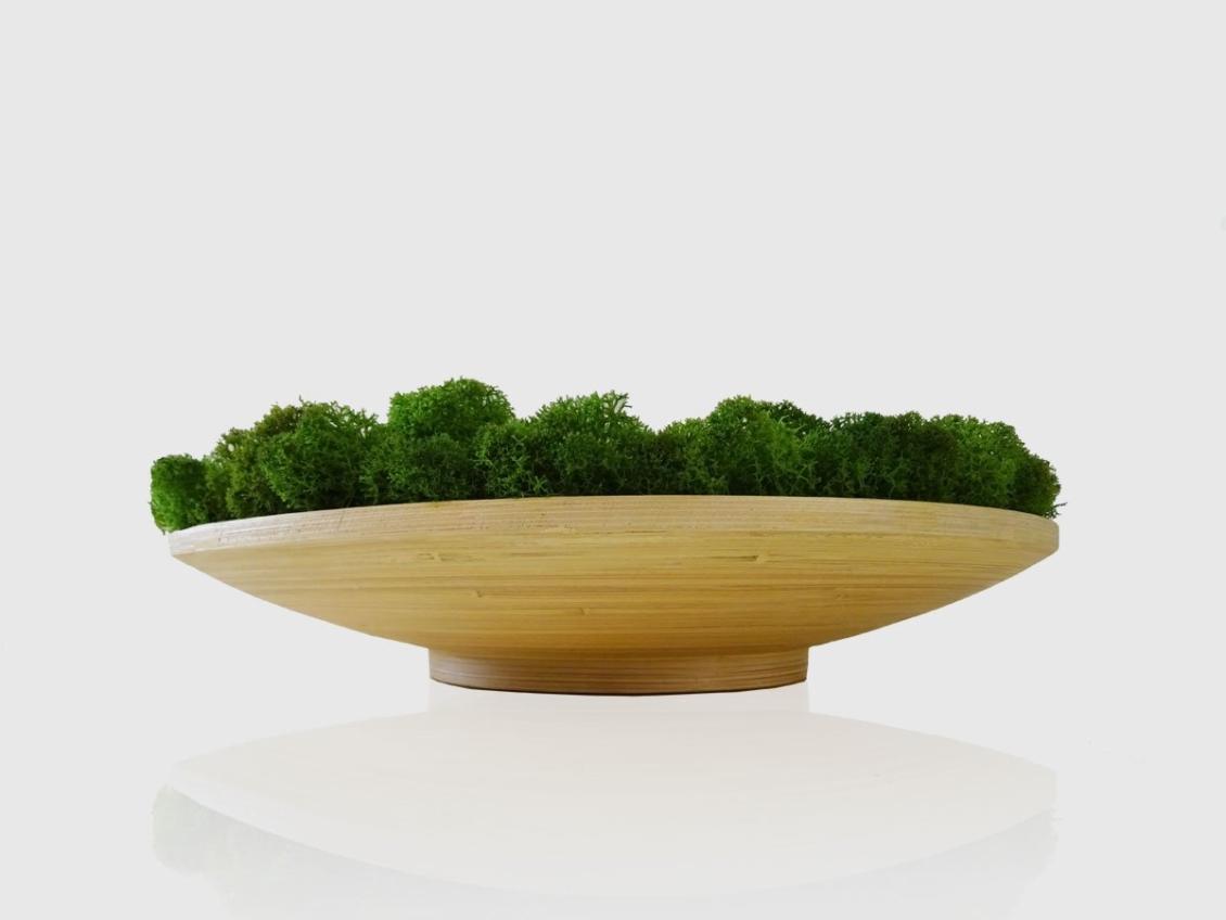 Soucoupe végétale