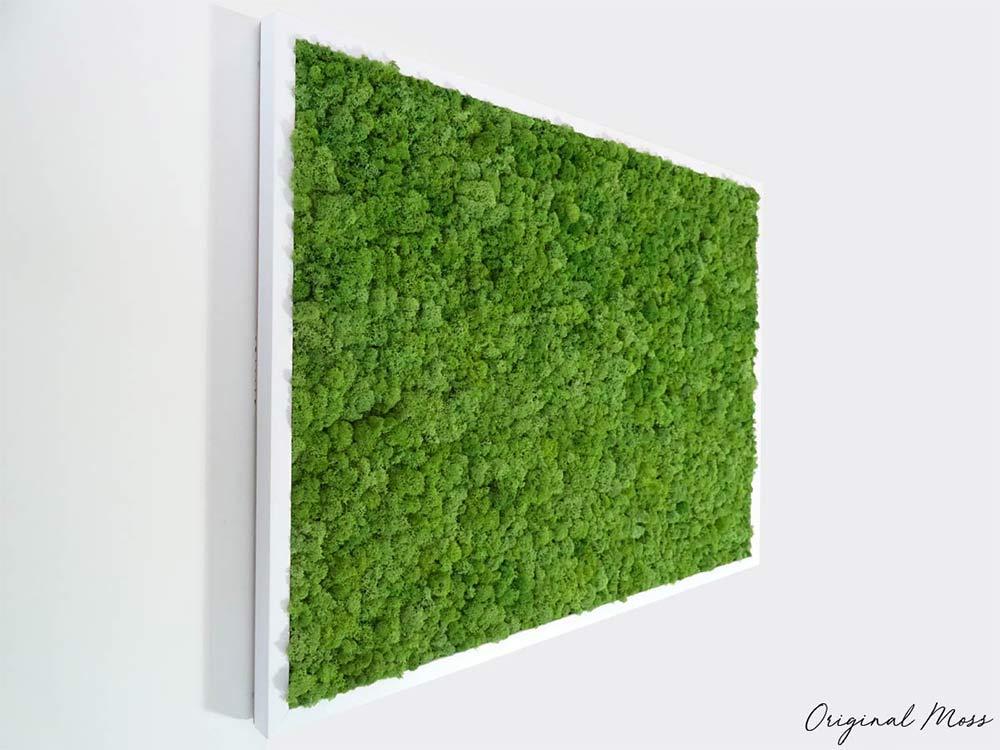 Tableau végétal en lichen stabilisé