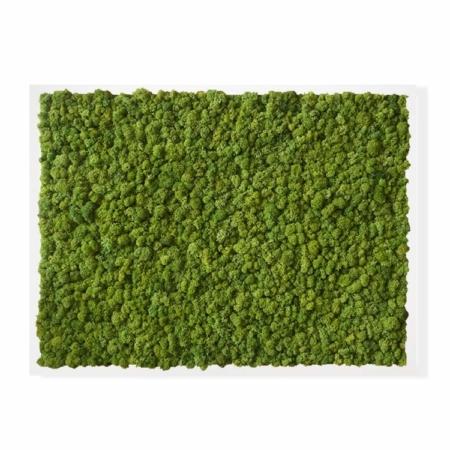 """TABLEAU VÉGÉTAL <br><span class=""""titre-produit-span-ligne2"""">en lichen scandinave naturel & stabilisé</span><br><span class=""""titre-produit-span-vert-lime"""">vert Lime</span>"""