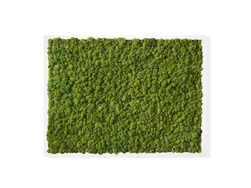Tableau végétal en lichen scandinave naturel & stabilisé
