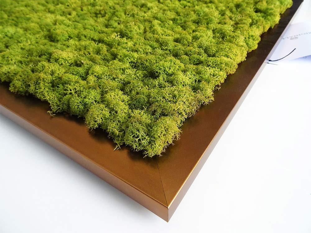 Tableau végétal stabilisé en lichen