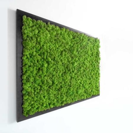 Tableau végétal lichen