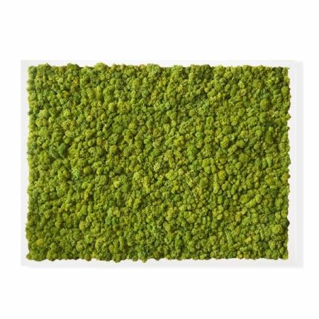 """TABLEAU VÉGÉTAL <br><span class=""""titre-produit-span-ligne2"""">en lichen scandinave naturel & stabilisé</span><br><span class=""""titre-produit-span-vert-pomme"""">vert Pomme</span>"""