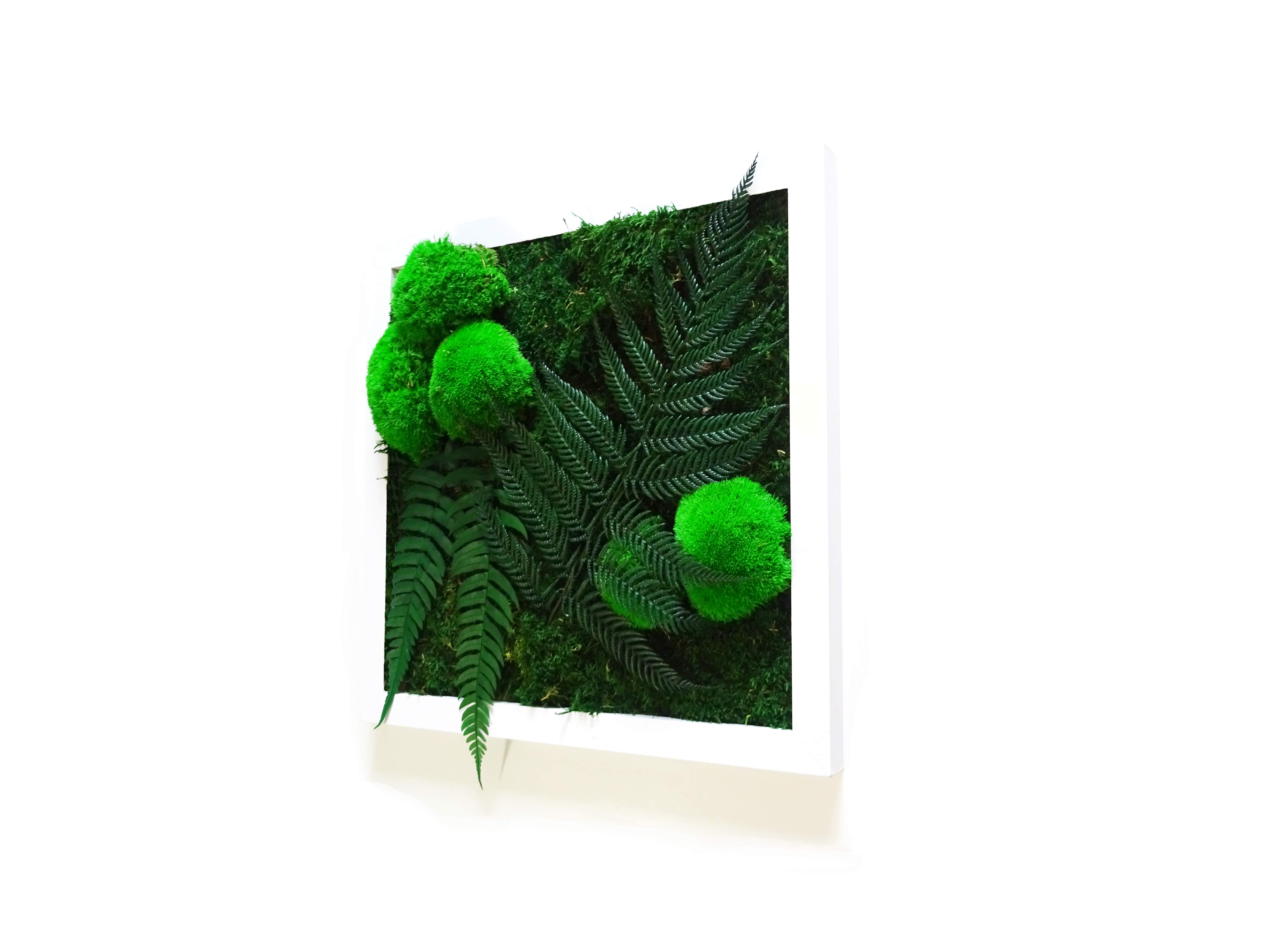 Plantes Pour Tableau Végétal Intérieur tableau végétal little forest - mousse et plantes stabilisées