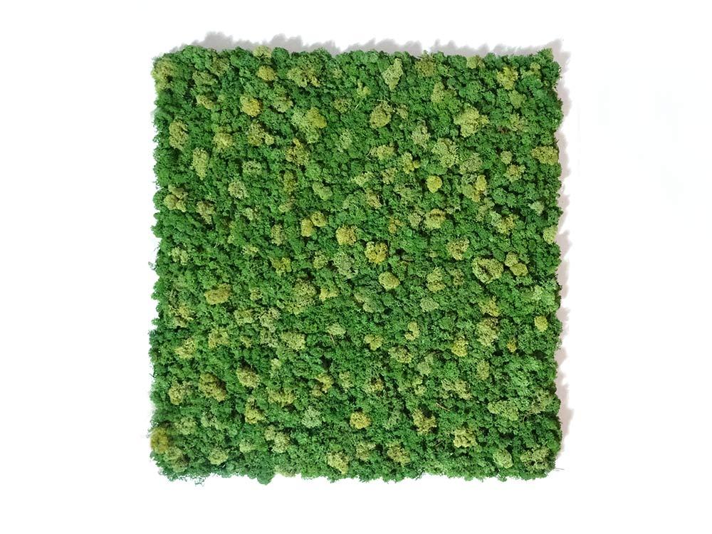 Tableau végétal - design Spot