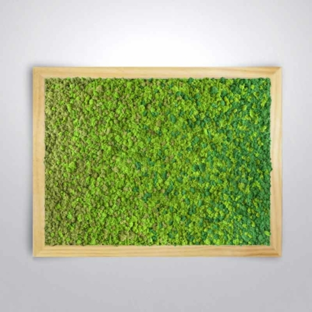 Tableau végétal design Dégradé - lichen naturel & stabilisé
