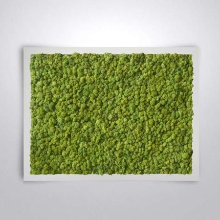 """Tableau végétal stabilisé <br><span class=""""titre-produit-span-vert-lime"""">Vert Lime</span>"""
