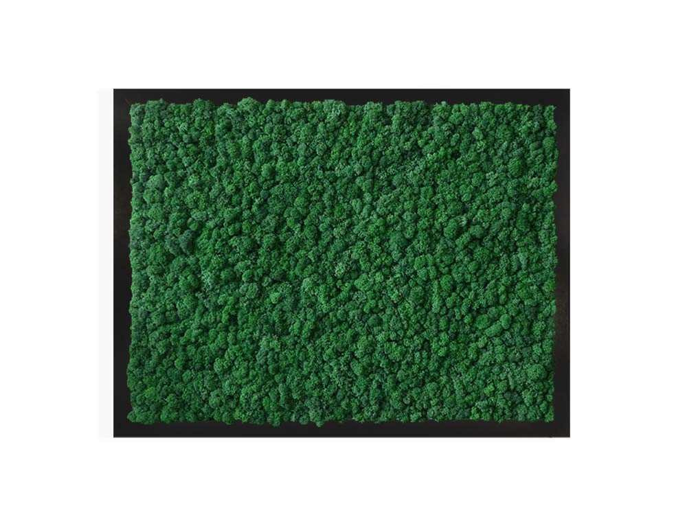 """TABLEAU VÉGÉTAL <br><span class=""""titre-produit-span-ligne2"""">en lichen scandinave naturel & stabilisé</span><br><span class=""""titre-produit-span-vert-tropical"""">vert Tropical</span>"""