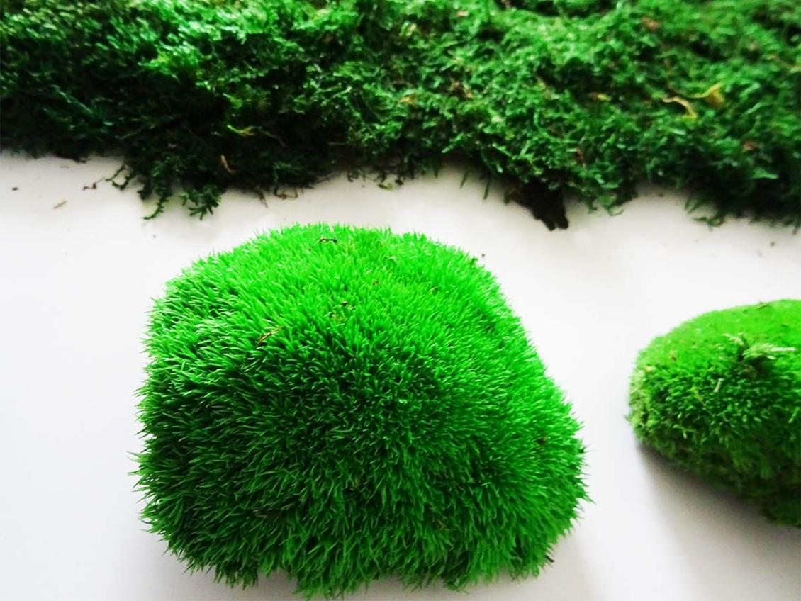 Tableau végétal mousse boules