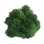 Tableau végétal design Ying-Yang - lichen naturel & stabilisé