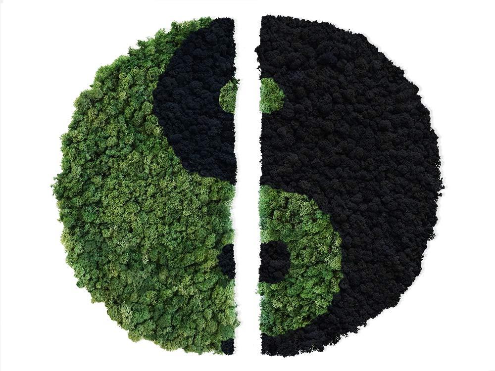 Yin Yang végétal en lichen stabilisé